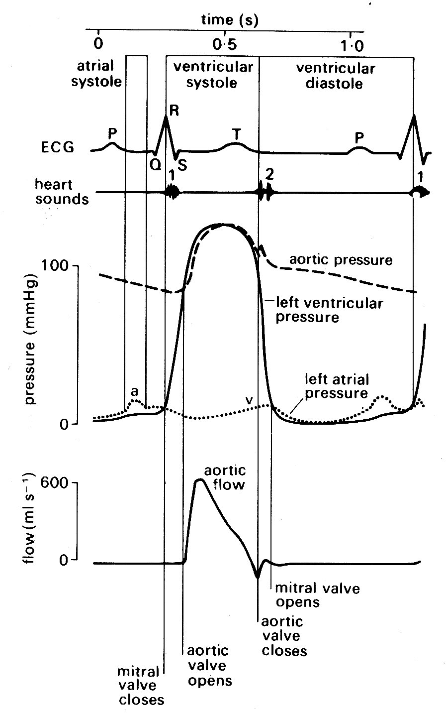 Chapter 11 semi diagrammatic illustration of the events on the left side of the heart during the cardiac cycle all pressures related to atmospheric ccuart Images